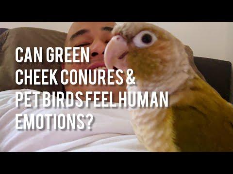 Can Green Cheek Conures/Pet Parrot Birds Feel and Sense Human Emotions?